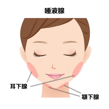 唾液腺の位置